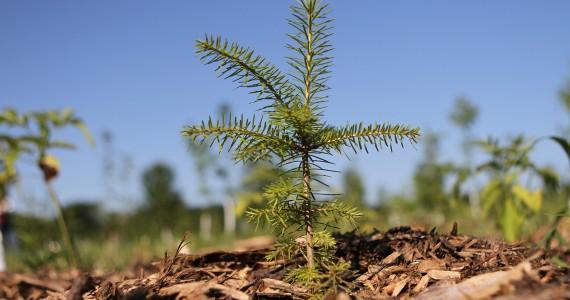 jour_de_la_terre_quebec_qc_375000_arbres