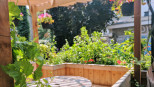 jour_de_la_terre_quebec_qc_blogue_article_trucs_astuces_cornelia_garbe_terrasse_mile_end_verdissement_plantation