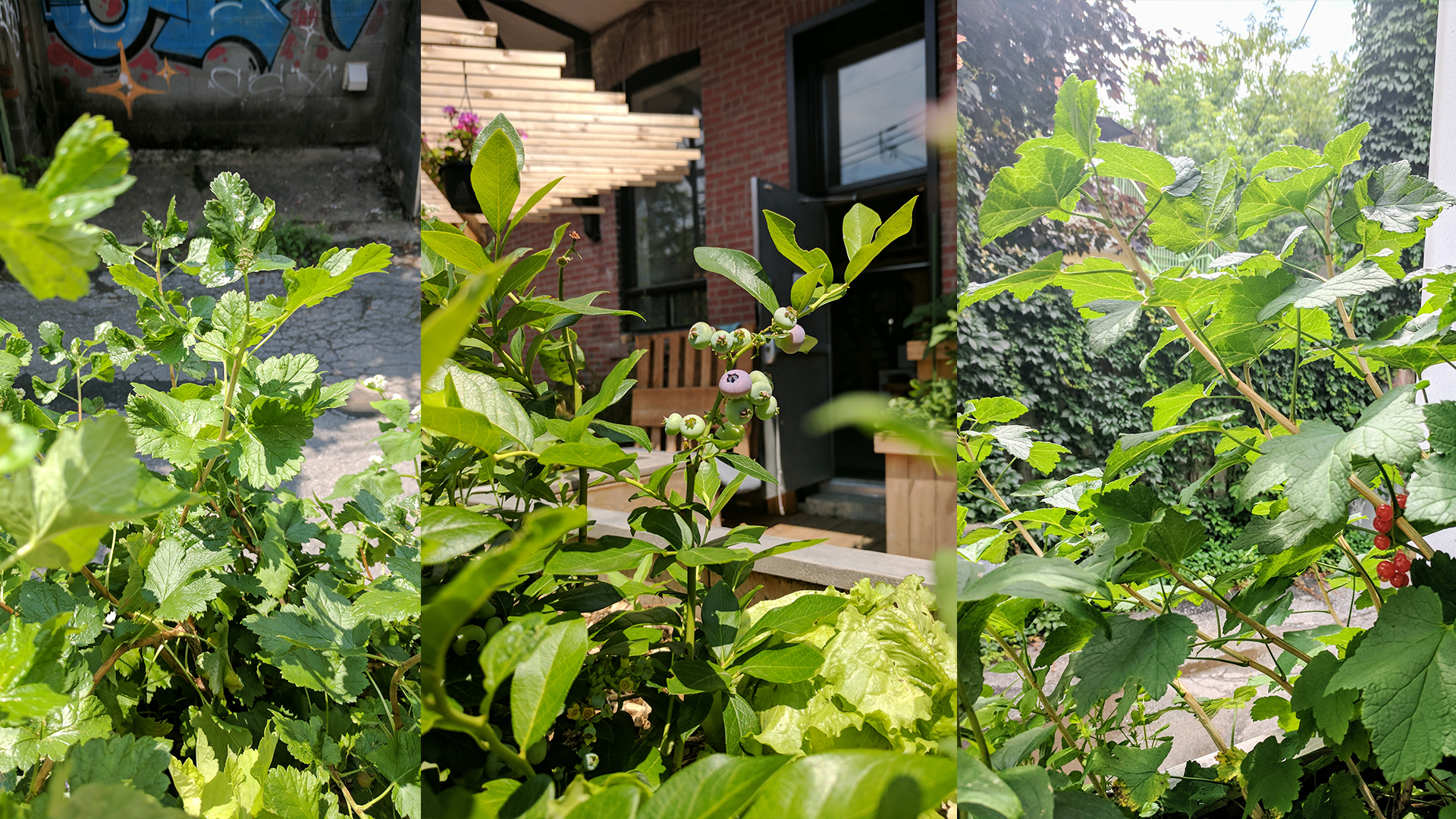 jour_de_la_terre_quebec_qc_blogue_article_trucs_astuces_cornelia_garbe_terrasse_mile_end_verdissement_plantation_arbustes