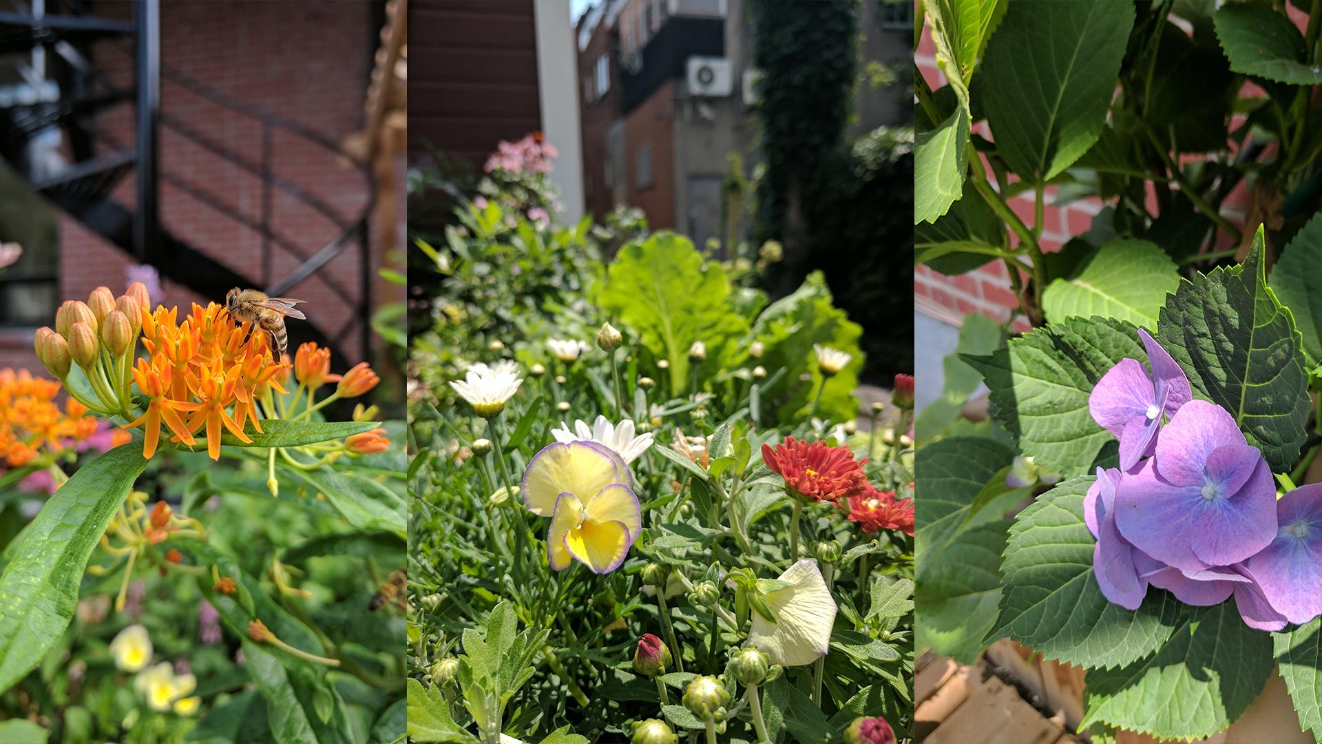 jour_de_la_terre_quebec_qc_blogue_article_trucs_astuces_cornelia_garbe_terrasse_mile_end_verdissement_plantation_fleurs