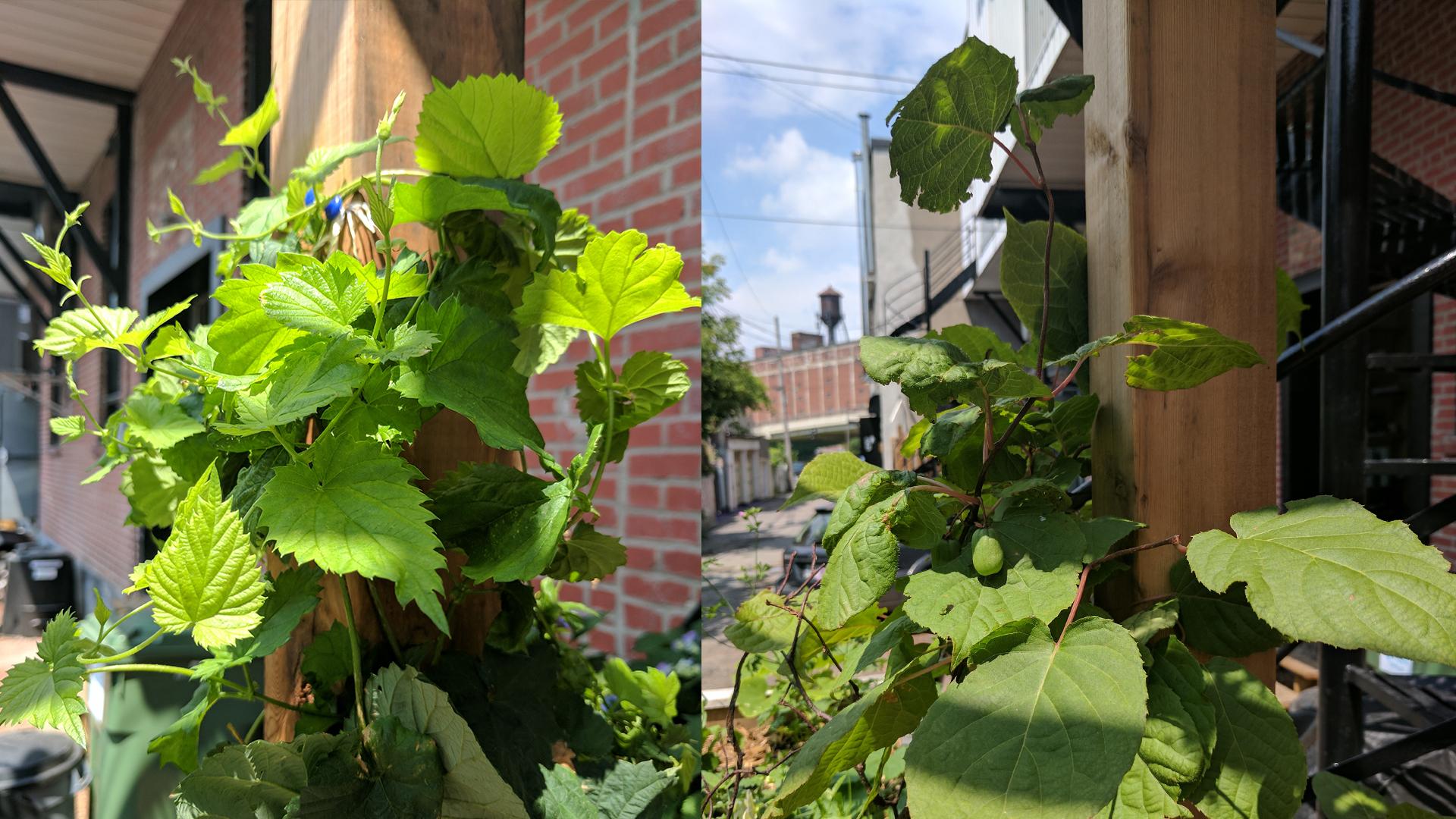 jour_de_la_terre_quebec_qc_blogue_article_trucs_astuces_cornelia_garbe_terrasse_mile_end_verdissement_plantation_vigne