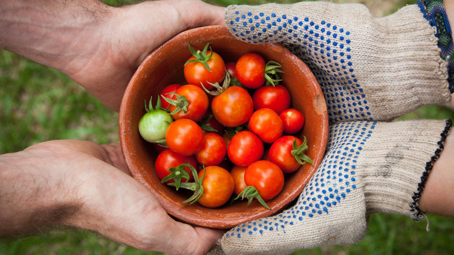 Blogue_article_lespoir_dun_renouveau_economique_tomates